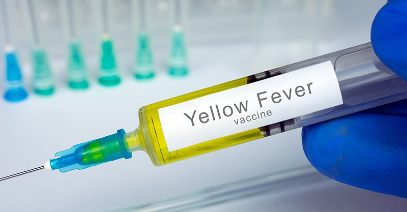 Image result for yellow fever vaccination