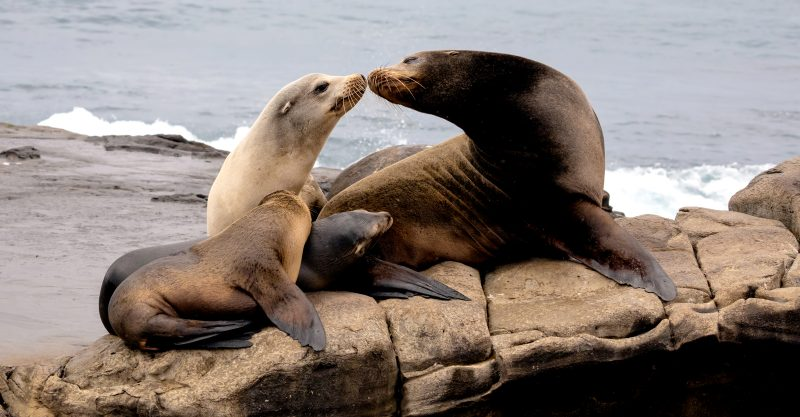 Sea lions in California are being struck with cancer at an alarming rate.