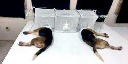 #BeagleGate made headlines this weekend.