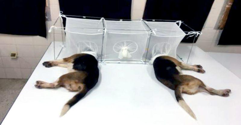 #BeagleGate machte dieses Wochenende Schlagzeilen.