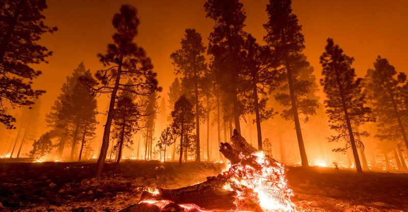 People the world over have suffered record-shattering temperatures and deadly extreme weather.
