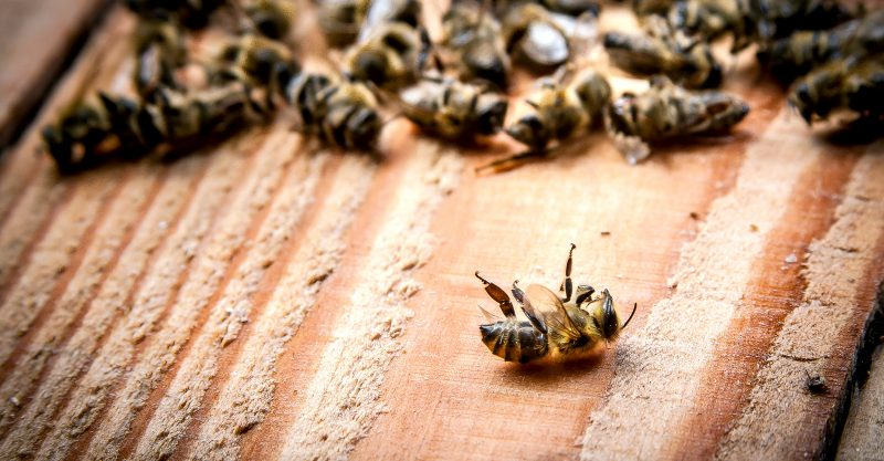 The production of many important food crops is dependent upon honeybees and wild bees.