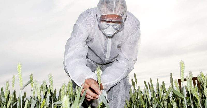Previously nearly all GMO plants had to go through formal USDA approval before open air experiments or prior to commercial use.