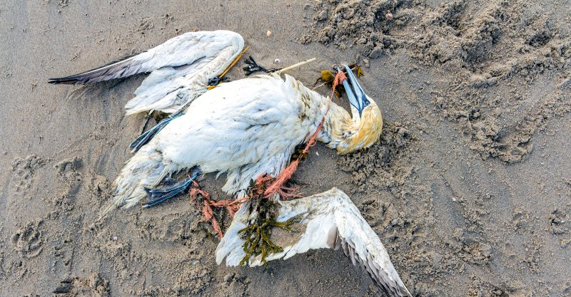 Want to Save Whales, Dolphins and Seabirds? Ditch These 4 Plastic Items.