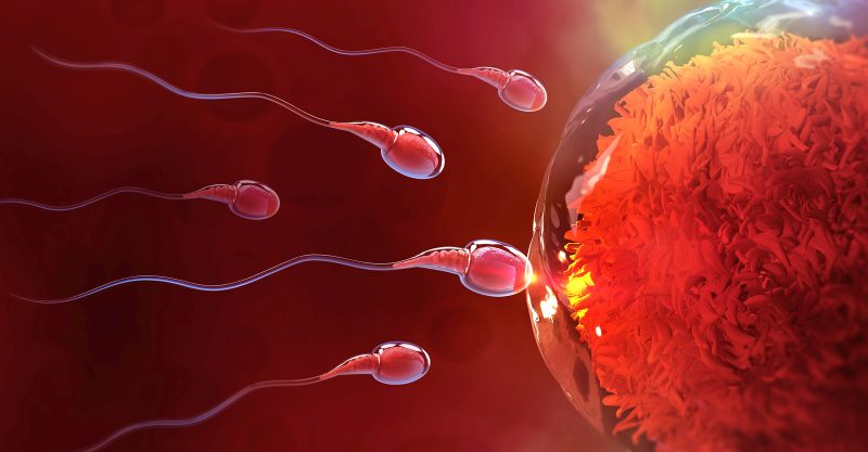 Sperm counts have dropped almost 60% since 1973.