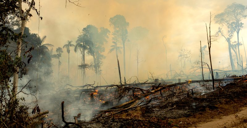 We need a global agreement to save the Amazon.'